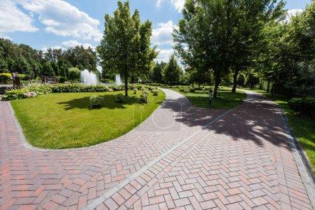 sombras en el camino cerca de los árboles con hojas verdes en el parque
