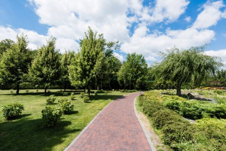 Foto de Shadows on green grass with bushes and trees in park - Imagen libre de derechos
