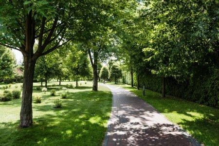 Photo pour Ombres sur l'herbe verte avec des buissons et des arbres près du chemin dans le parc - image libre de droit