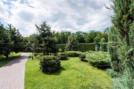 Photo pour Foyer sélectif du sapin près des buissons et des usines sur l'herbe verte - image libre de droit