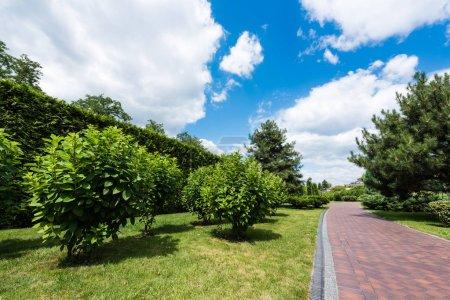 Photo pour Green trees on grass near path against blue sky and clouds - image libre de droit