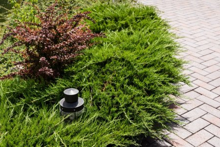 Photo for Green conifer plants near outdoor lamp and walkway - Royalty Free Image