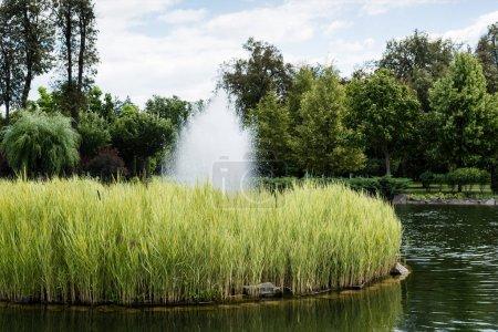 Photo pour Étang avec la fontaine près des buissons, des usines et des arbres dans le stationnement - image libre de droit