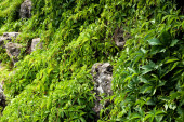 "Постер, картина, фотообои ""selective focus of green fresh leaves on plants near stones """