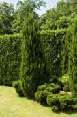 """Постер, картина, фотообои """"зеленая ель возле кустов и растений на траве в парке"""""""
