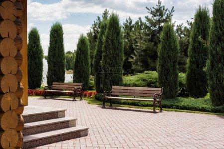 Photo pour Sapins verts près des bancs en bois dans le stationnement d'été - image libre de droit