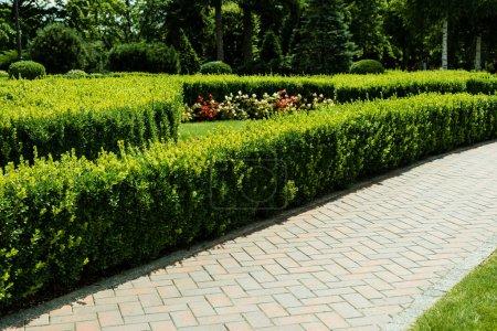Photo pour Soleil sur la passerelle près des plantes vertes et des arbres dans le stationnement - image libre de droit