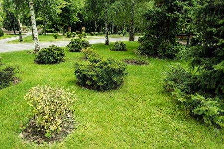 Photo pour Arbustes verts sur l'herbe fraîche près des arbres et des pins dans le stationnement - image libre de droit
