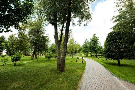 Photo pour Chemin près des arbres verts sur l'herbe fraîche contre le ciel avec des nuages - image libre de droit