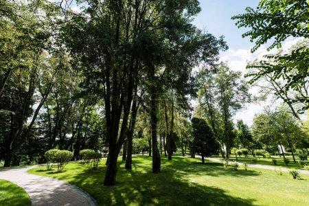 Photo pour Sentier près des arbres sur de l'herbe fraîche contre le ciel avec des nuages - image libre de droit