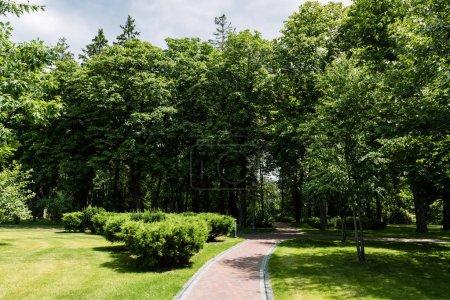 Photo pour Soleil sur le chemin avec des ombres d'arbres dans le stationnement d'été - image libre de droit