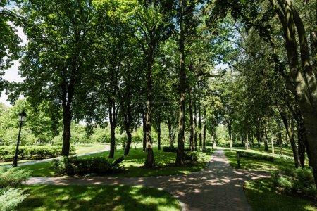 Photo pour Lumière du soleil sur le chemin avec des ombres des arbres et des buissons dans le stationnement - image libre de droit