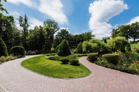 Photo pour Buissons verts sur l'herbe près des arbres et des pins dans le parc - image libre de droit