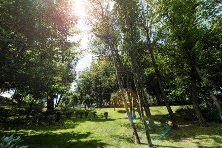 Photo pour Soleil sur l'herbe verte, les arbres et les buissons dans le stationnement - image libre de droit
