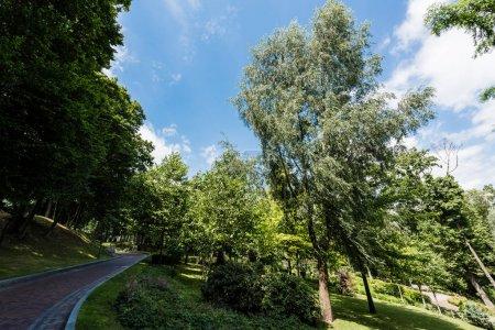 Photo pour Pavés sur la passerelle près des arbres verts et des buissons dans le parc - image libre de droit