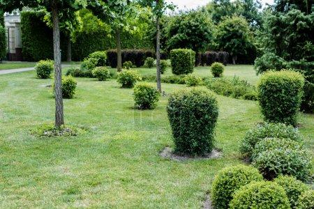 Photo pour Foyer sélectif des feuilles vertes sur les buissons sur l'herbe près des arbres dans le parc - image libre de droit