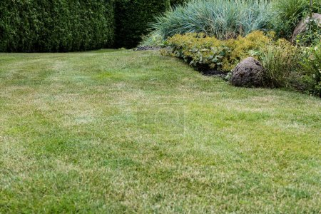 Photo for Selective focus of fresh green grass near small bushes - Royalty Free Image