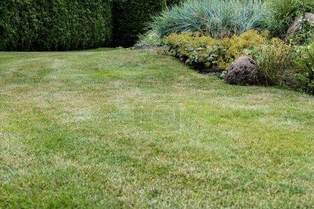 Foto de Selective focus of fresh green grass near small bushes - Imagen libre de derechos