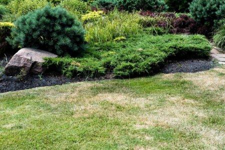 Photo pour Mise au point sélective de l'herbe verte fraîche près des petits conifères - image libre de droit