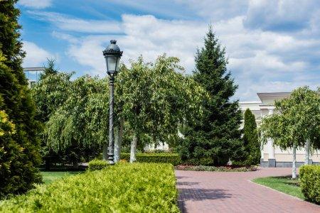 Photo pour Foyer sélectif de lampadaire près des buissons et des arbres verts dans le stationnement - image libre de droit