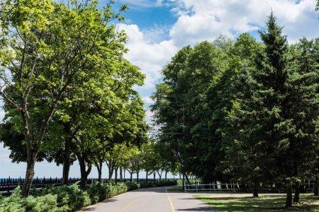 Photo pour Sapins près des conifères et des passerelles en été - image libre de droit