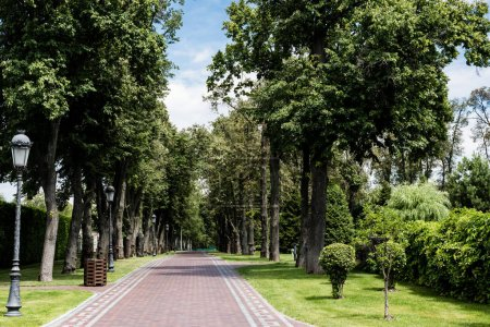 Foto de Street lamp near walkway and trees on green grass - Imagen libre de derechos