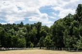 """Постер, картина, фотообои """"green park with trees and bushes on grass in summertime """""""