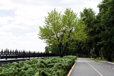 Photo pour Chemin avec ligne jaune près des arbres avec des feuilles fraîches vertes - image libre de droit