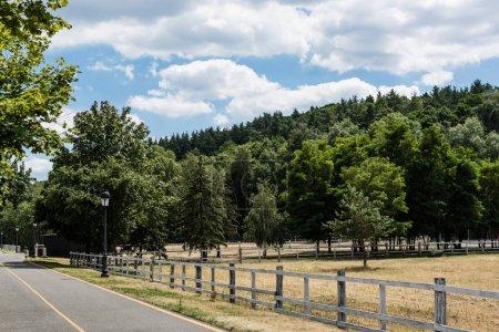 Photo pour Chemin avec la ligne jaune près de la clôture et des arbres avec les feuilles fraîches vertes - image libre de droit