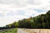 "Постер, картина, фотообои ""sunshine on green park with trees and bushes in summer"""