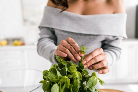 Photo for Cropped view of woman touching fresh peppermint leaves - Royalty Free Image
