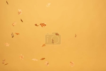Photo for Golden maple leaves falling down isolated on yellow - Royalty Free Image