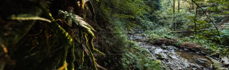 Photo for Panoramic shot of flowing river near stones and trees - Royalty Free Image
