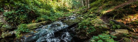 Photo for Panoramic shot of flowing river near stones in woods - Royalty Free Image
