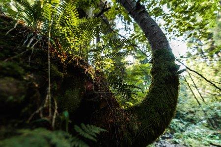 Photo pour Mise au point sélective des feuilles vertes sur les branches dans le parc - image libre de droit