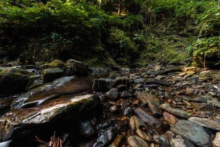 Photo pour Plantes vertes près des pierres humides dans les bois - image libre de droit