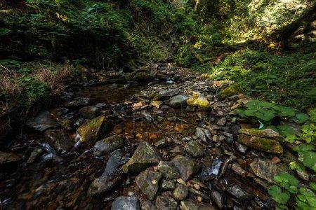Sonnenschein auf grünen Pflanzen in der Nähe von nassen Steinen im Wald