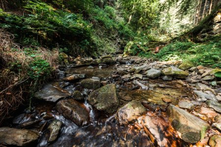 Photo pour Vapeur s'écoulant sur des pierres humides près des arbres verts - image libre de droit