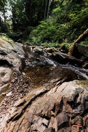 Photo pour Rivière qui coule près de roches humides et d'arbres verts - image libre de droit