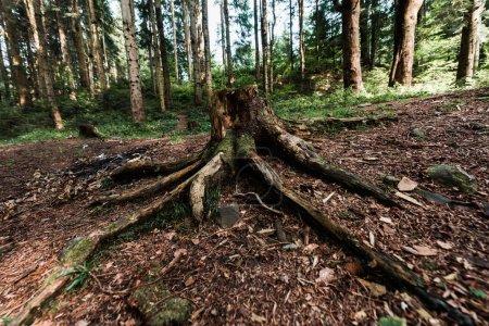 Photo pour Arbre haché avec des racines près des usines dans les bois - image libre de droit