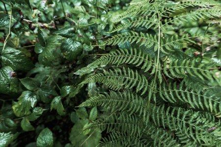 Photo pour Mise au point sélective des feuilles humides et fraîches dans le stationnement - image libre de droit