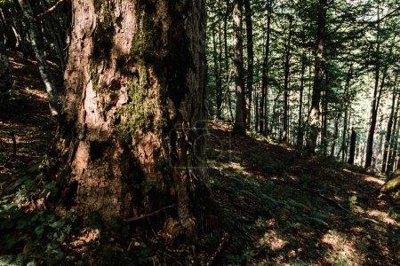 Photo pour Soleil sur le tronc d'arbre près des plantes dans les bois - image libre de droit