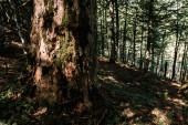 """Постер, картина, фотообои """"солнце на стволе дерева возле растений в лесу"""""""