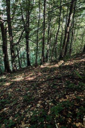 Photo pour Ombres sur le sol près des arbres avec des feuilles vertes fraîches dans la forêt - image libre de droit