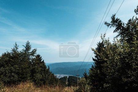 Photo pour Pins verts près des montagnes contre le ciel bleu avec des nuages - image libre de droit