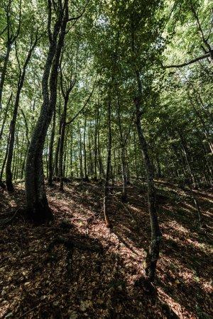 Photo pour Ombres sur le sol près des arbres avec des feuilles fraîches dans la forêt - image libre de droit