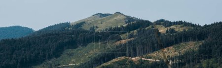Photo for Panoramic shot of green trees in mountain valley - Royalty Free Image