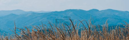 Foto de Plano panorámico de campo dorado cerca de montañas escénicas - Imagen libre de derechos