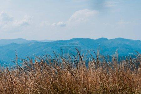 Photo pour Champ d'orge doré près des montagnes scéniques contre le ciel - image libre de droit