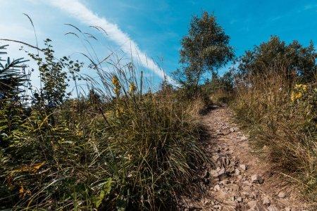 Photo pour Vue à angle bas des arbres près des rochers sur la passerelle - image libre de droit